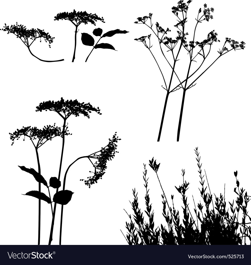 Wild flower silhouettes Royalty Free Vector Image