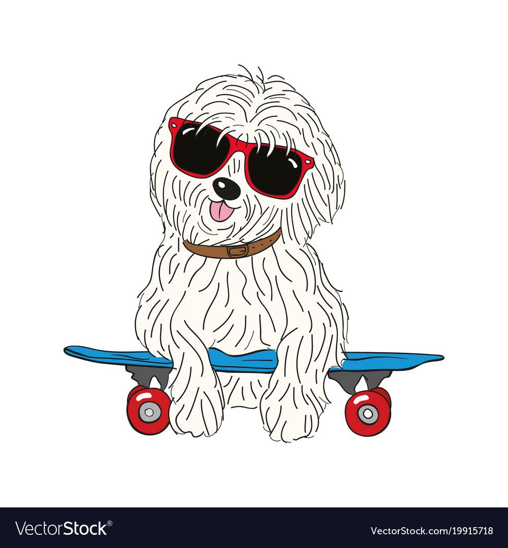 Coton de tulear dog breed vintage vector image