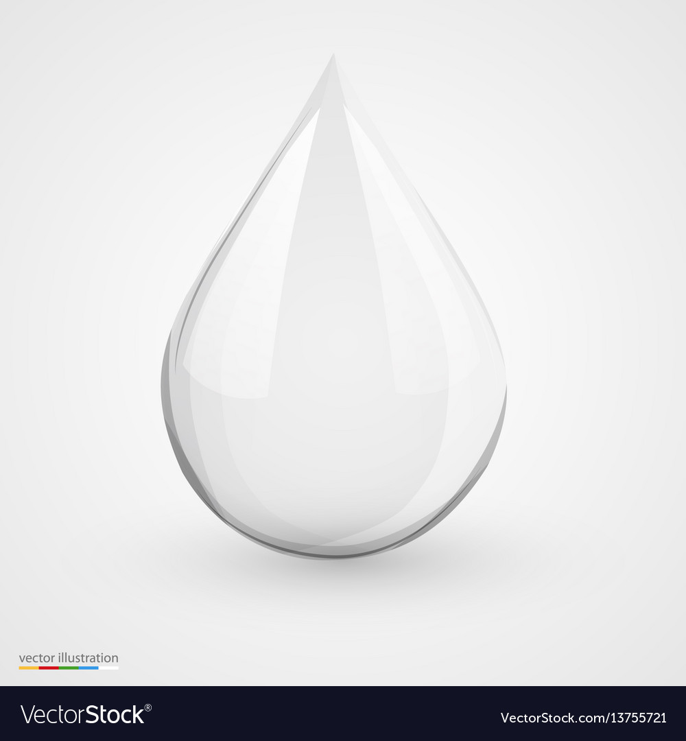 Water drop on white isolated vector image