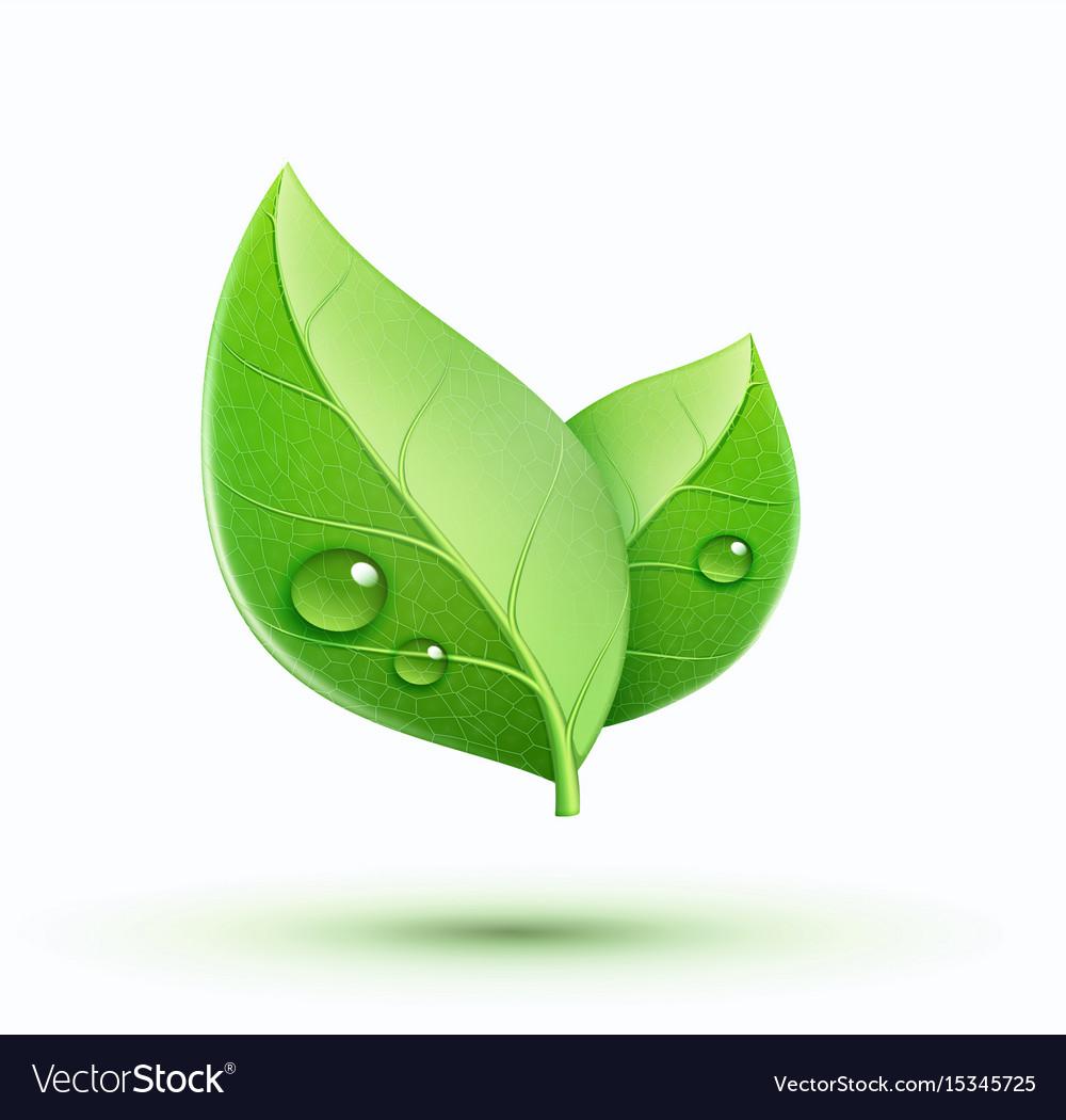 Eco concept icon vector image
