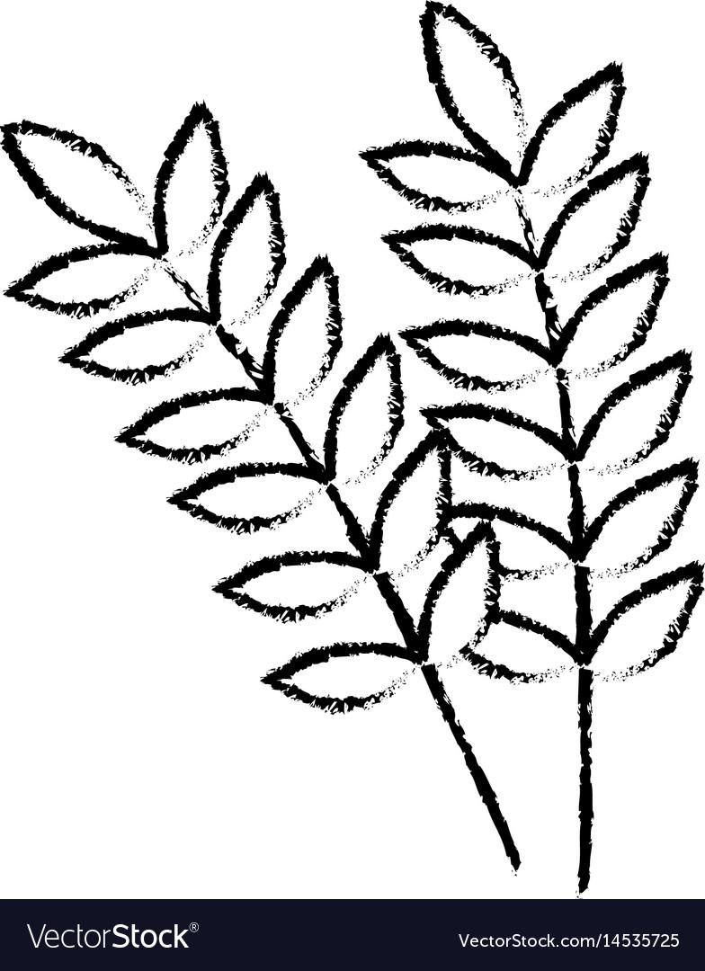 Figure healthy wheats organ plant nutricious vector image