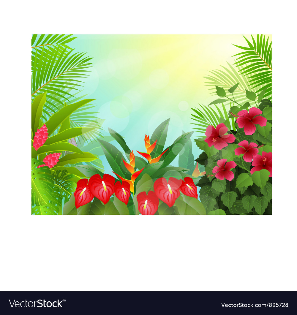 Tropical forest background vector image