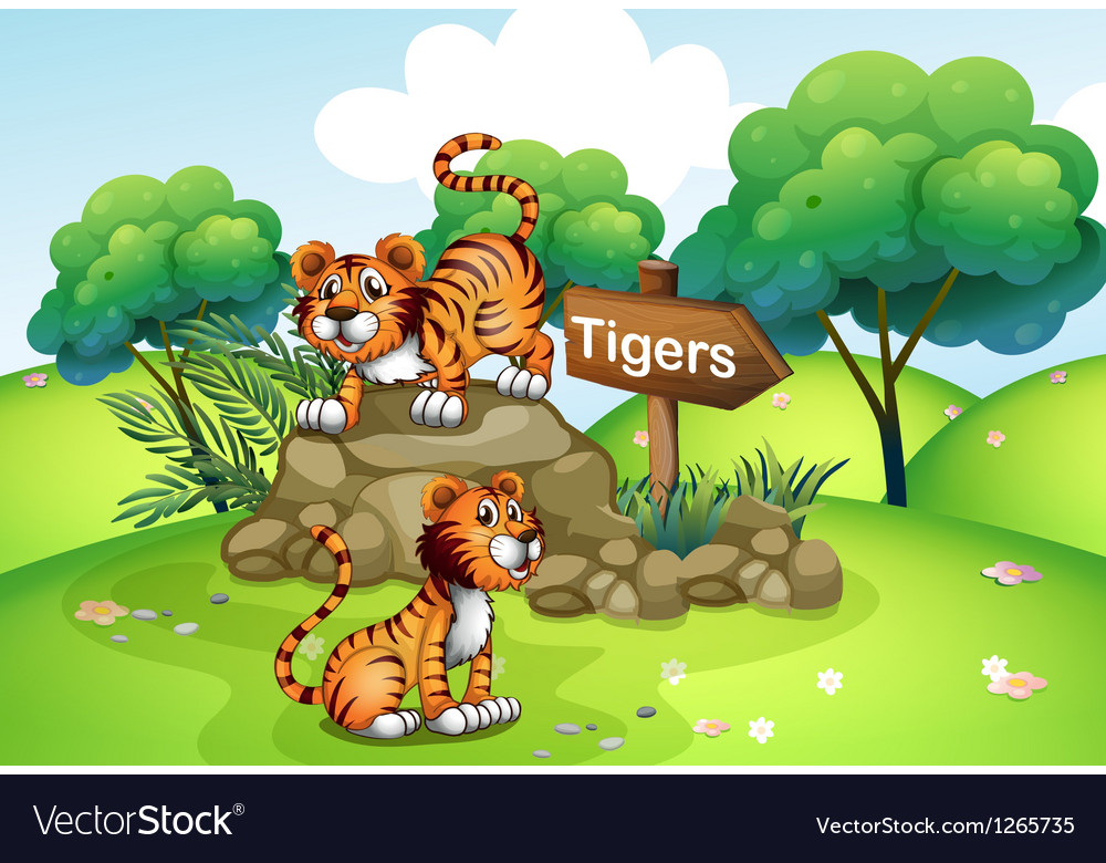 Tigers near the wooden arrow vector image