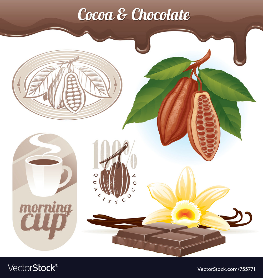 Set - cocoa beans and chocolate vector image