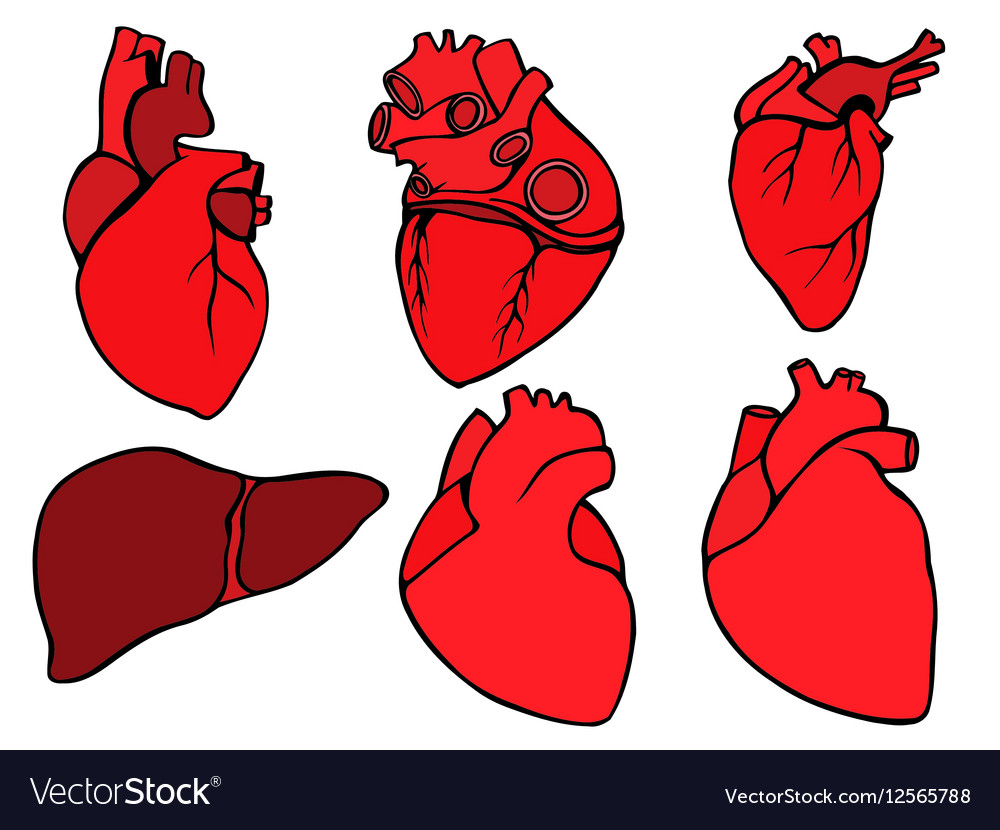 Human heart icon cartoon style vector image