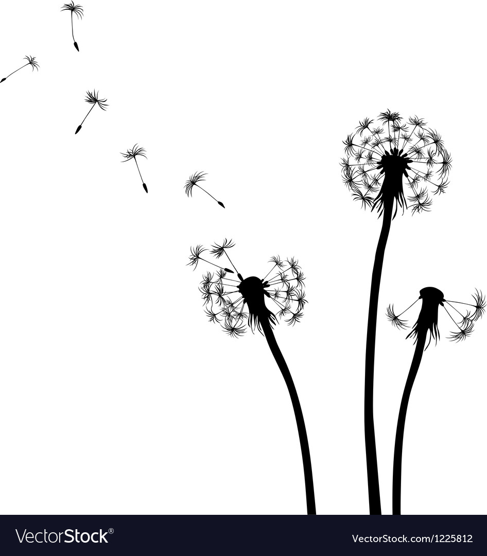Dandelion silhouettes black and white vector image