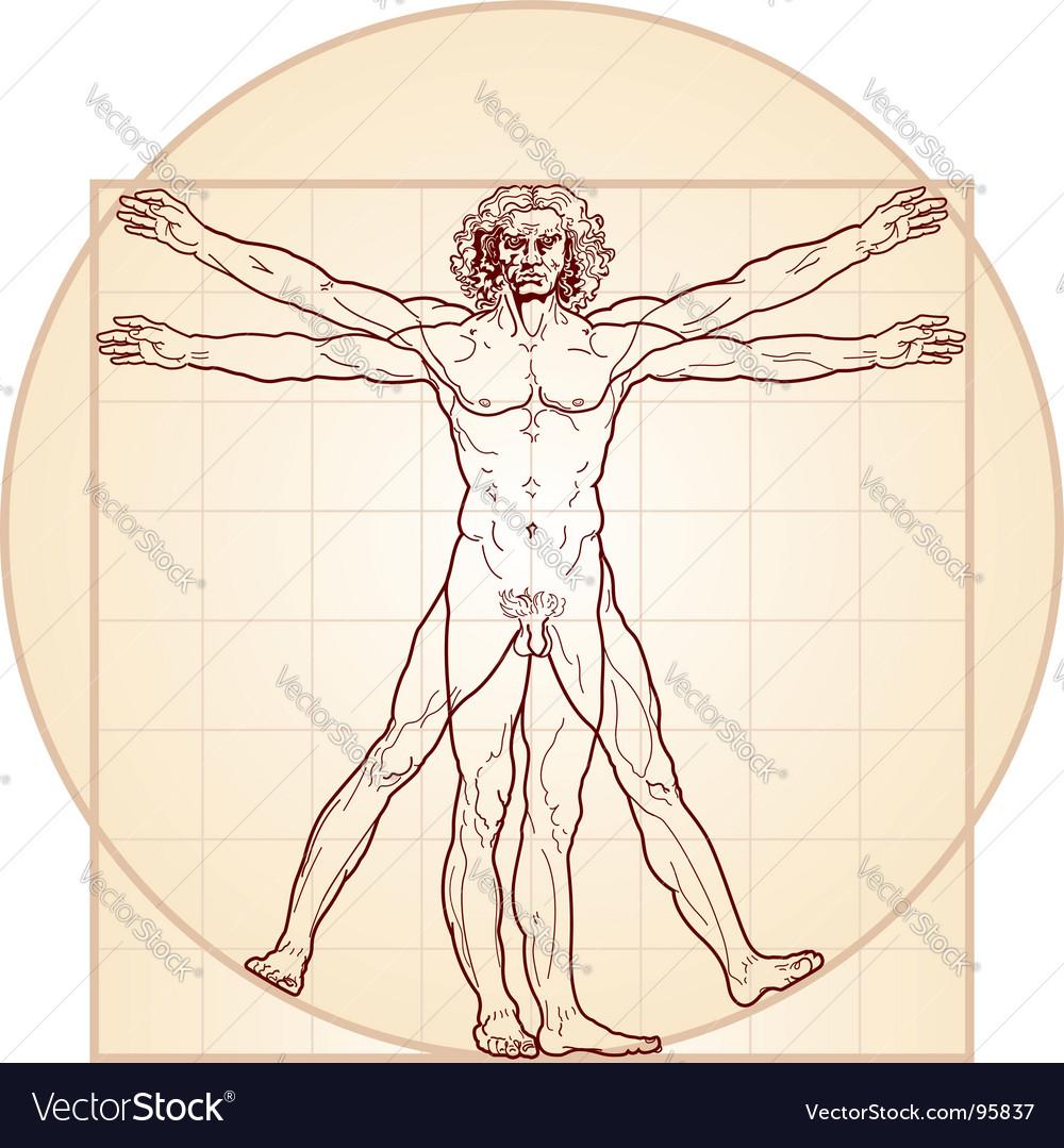 The Vitruvian man vector image