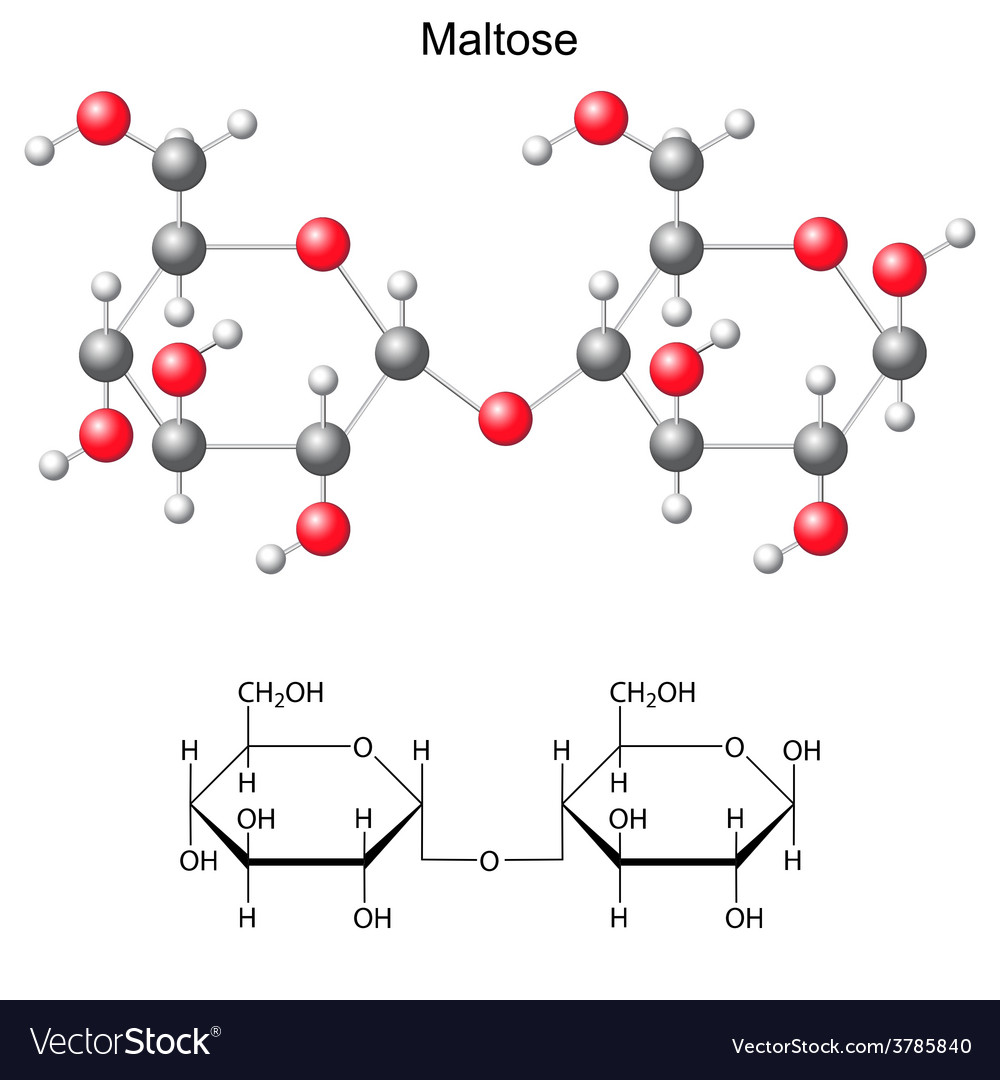 Structural chemical formula and model of maltose vector image