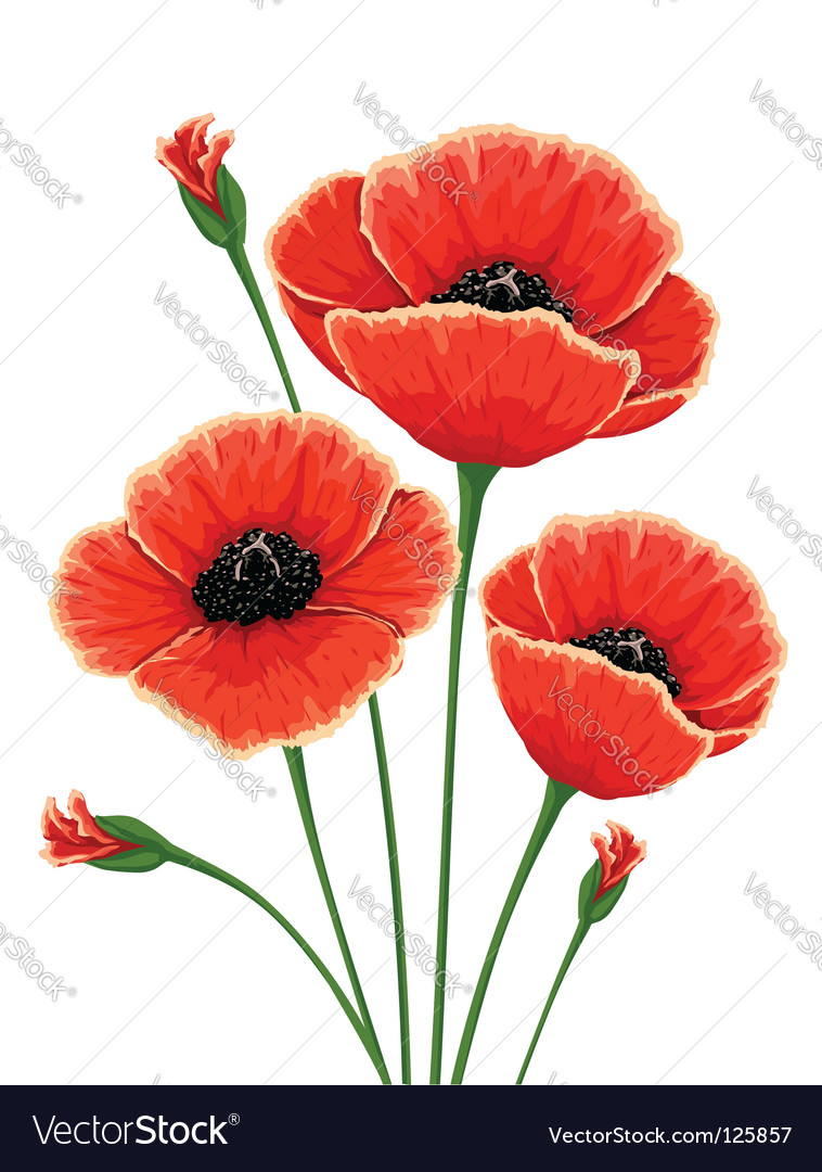 Red poppy flowers royalty free vector image vectorstock red poppy flowers vector image mightylinksfo Gallery