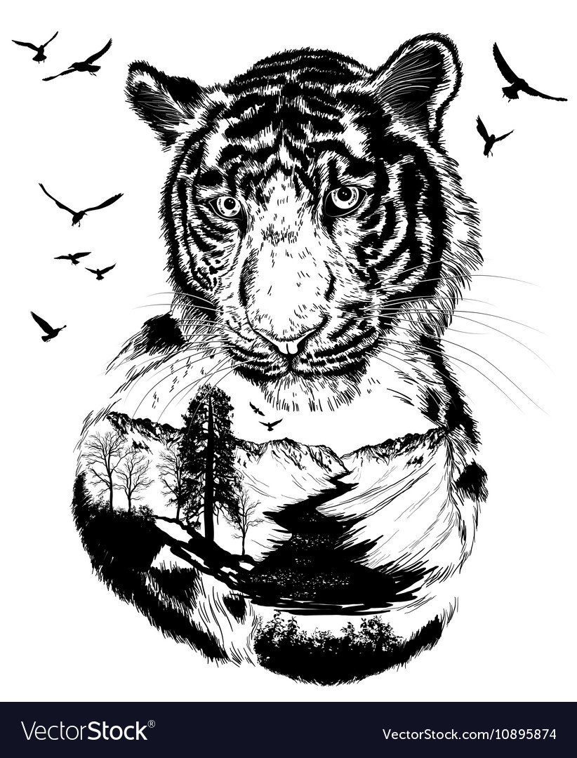 Double exposure Hand drawn Tiger vector image