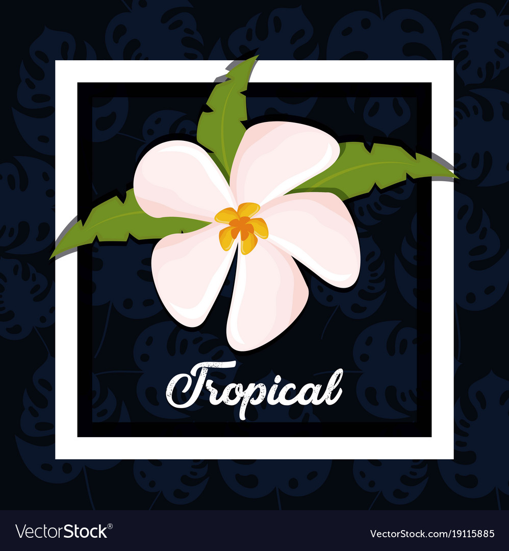 Beautiful exotic tropical flower royalty free vector image beautiful exotic tropical flower vector image izmirmasajfo