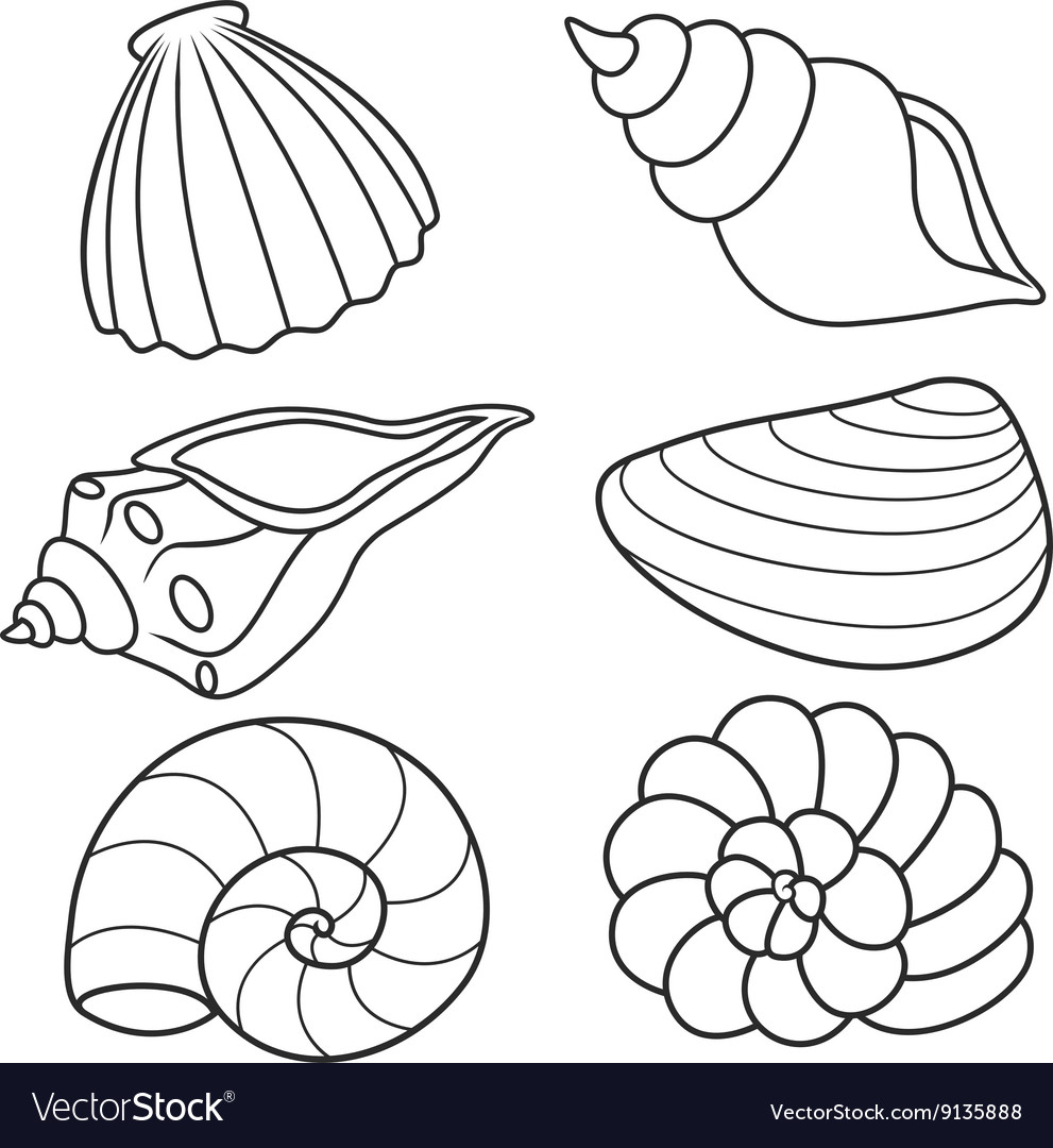 Shell set vector image