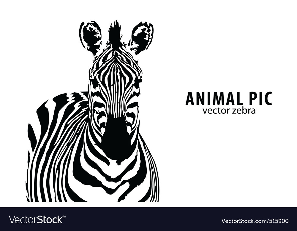 Vector zebra vector image
