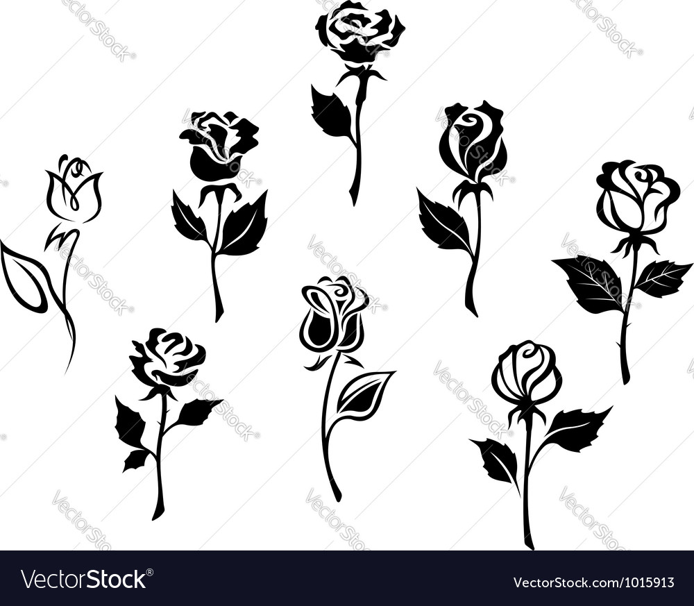Beautiful roses silhouettes vector image