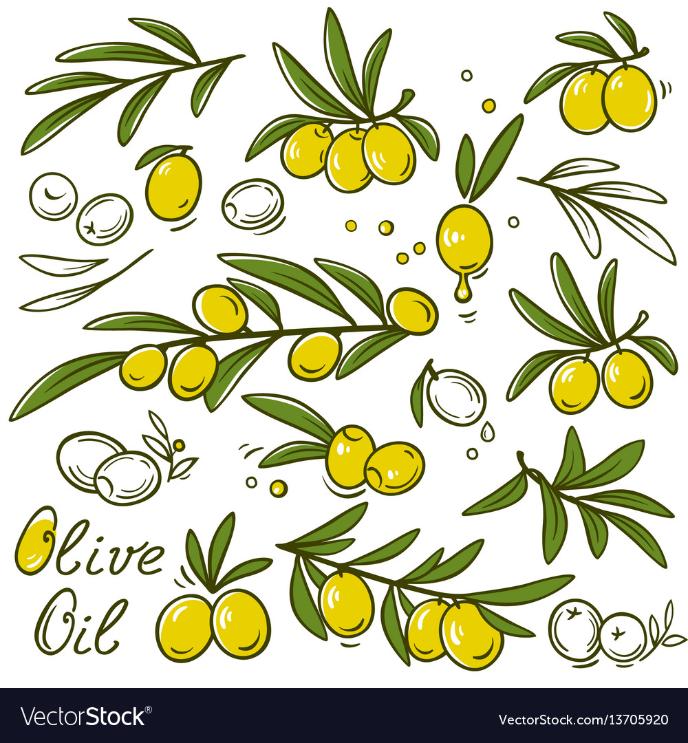 Olive branches set vector image