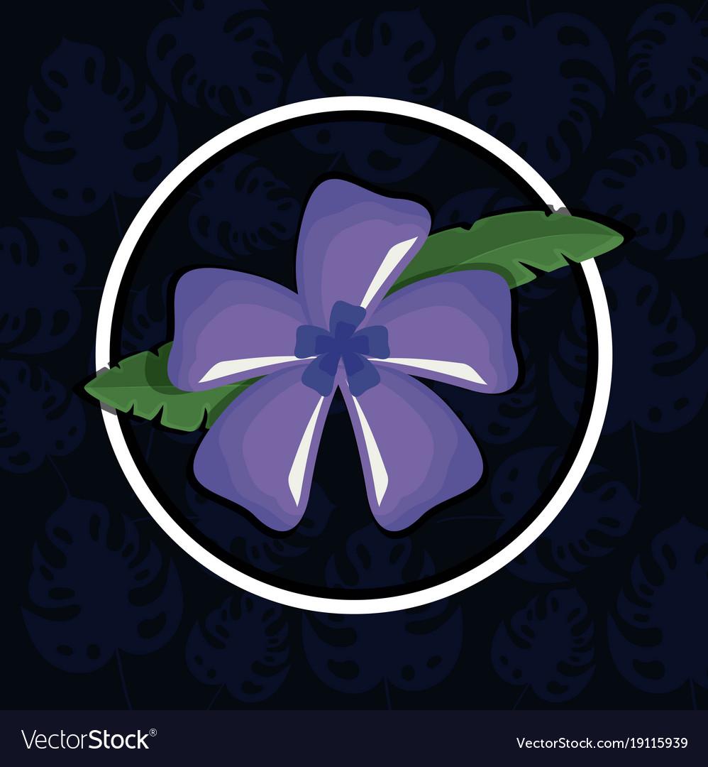 Beautiful exotic tropical flower royalty free vector image beautiful exotic tropical flower vector image izmirmasajfo Images