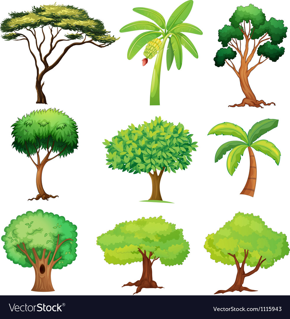 Various trees vector image
