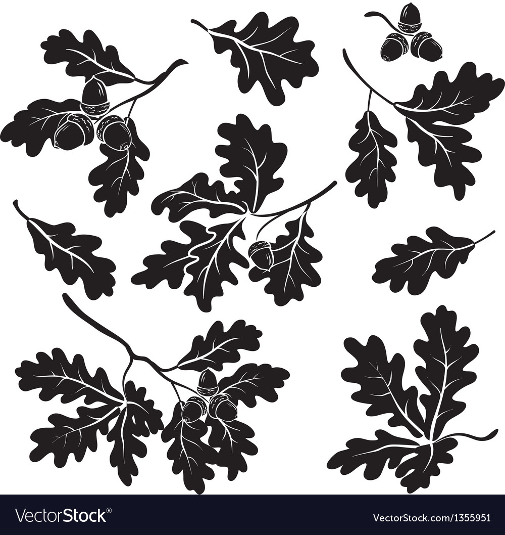 Oak branches with acorns silhouettes vector image