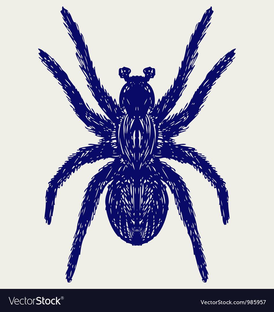 Spider tarantula vector image