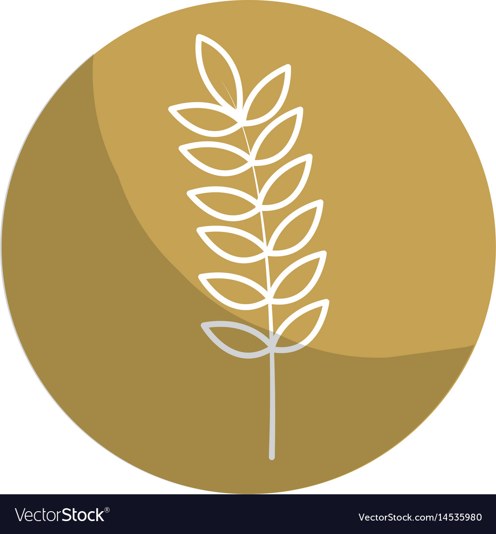 Sticker healthy wheat organ plant nutricious vector image