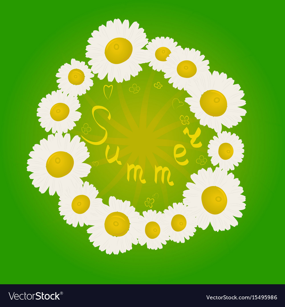 Summer chamomile flowers in a circle vector image