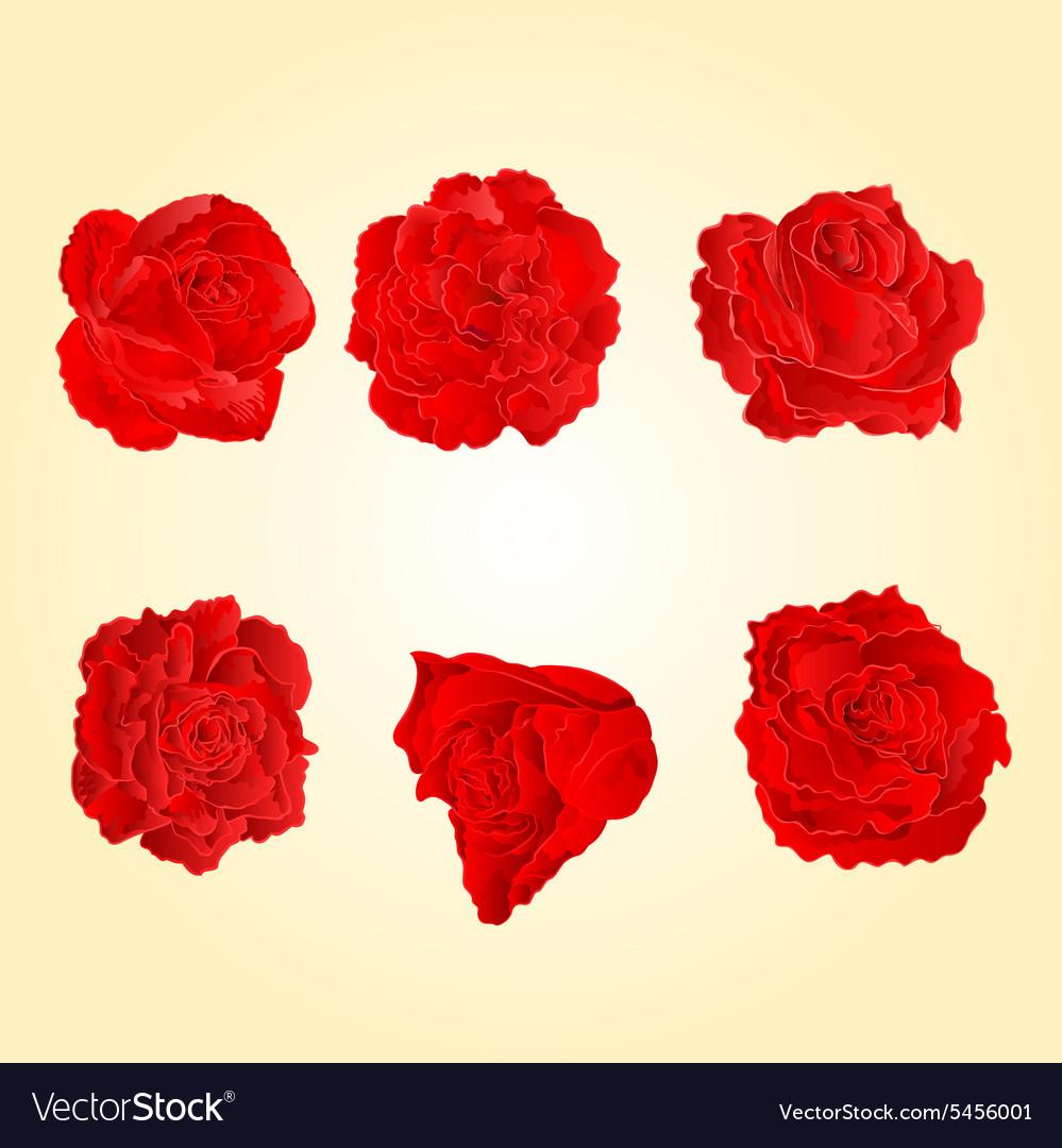 Blossom red roses symbol of love royalty free vector image blossom red roses symbol of love vector image buycottarizona