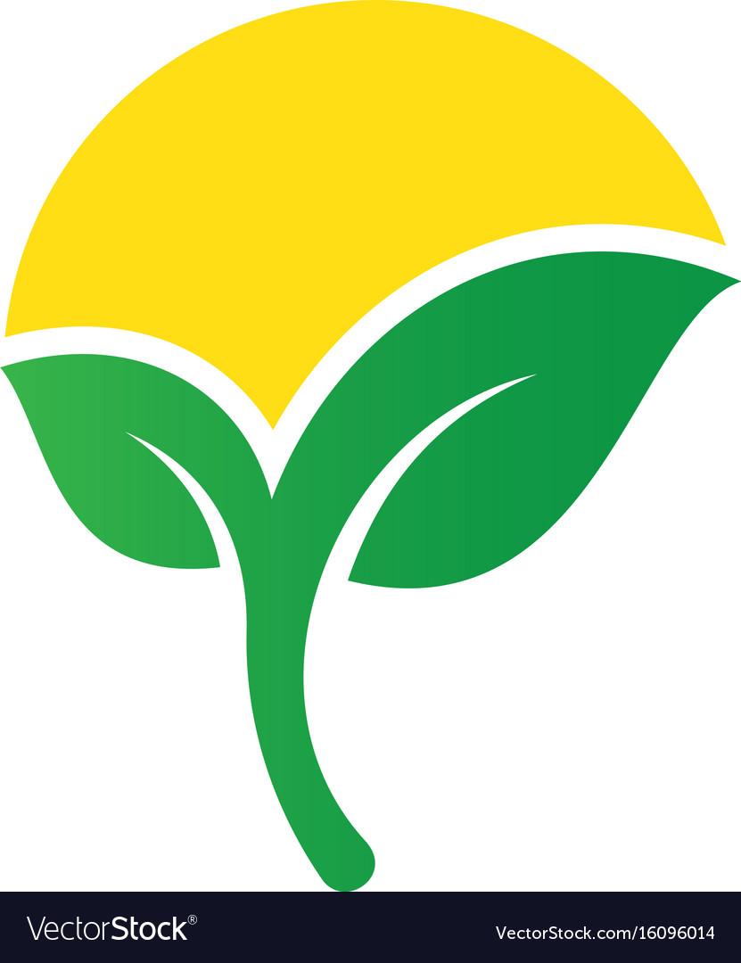 abstract leaf sun logo royalty free vector image rh vectorstock com sun records logo vector sun free vector art