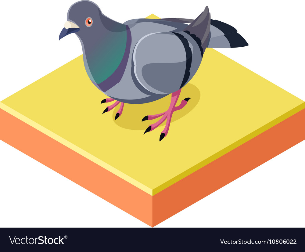 Isometric Pigeon on the square ground2 vector image