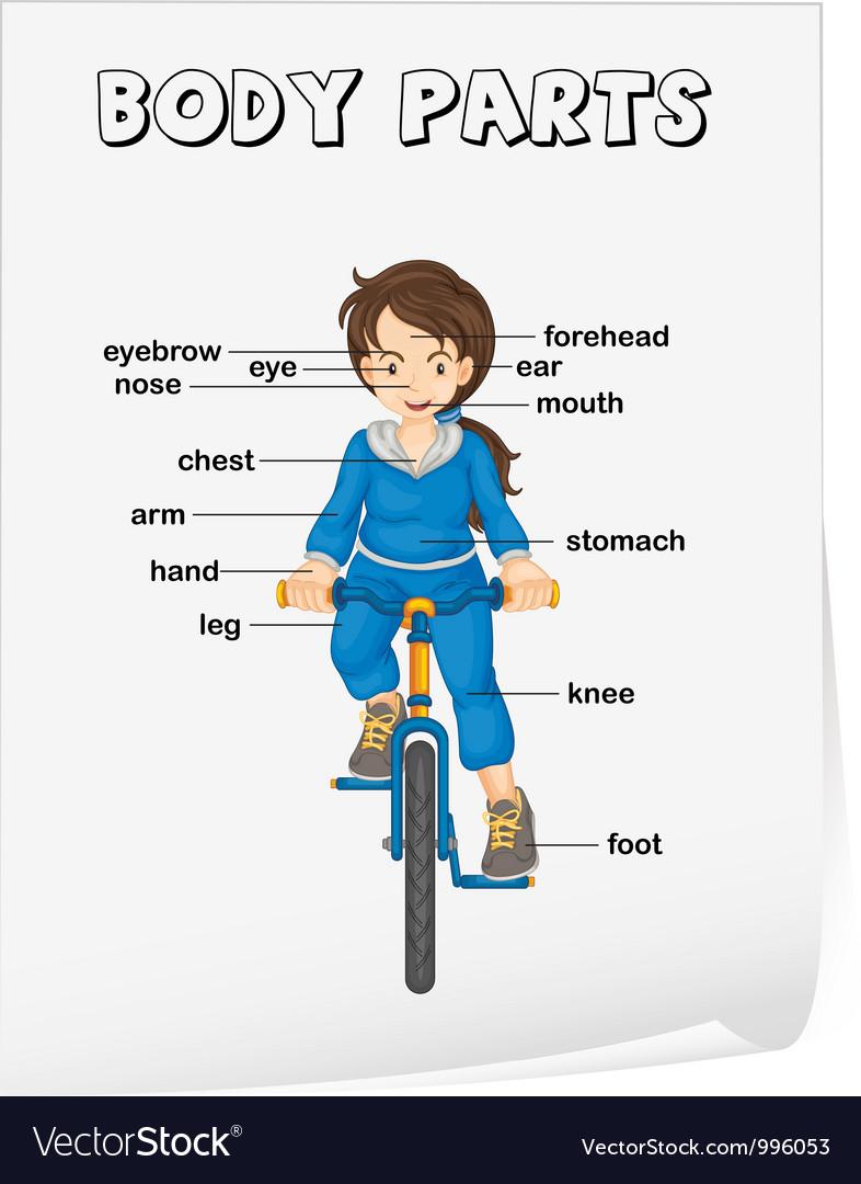 Body Parts Diagram Poster Royalty Free Vector Image
