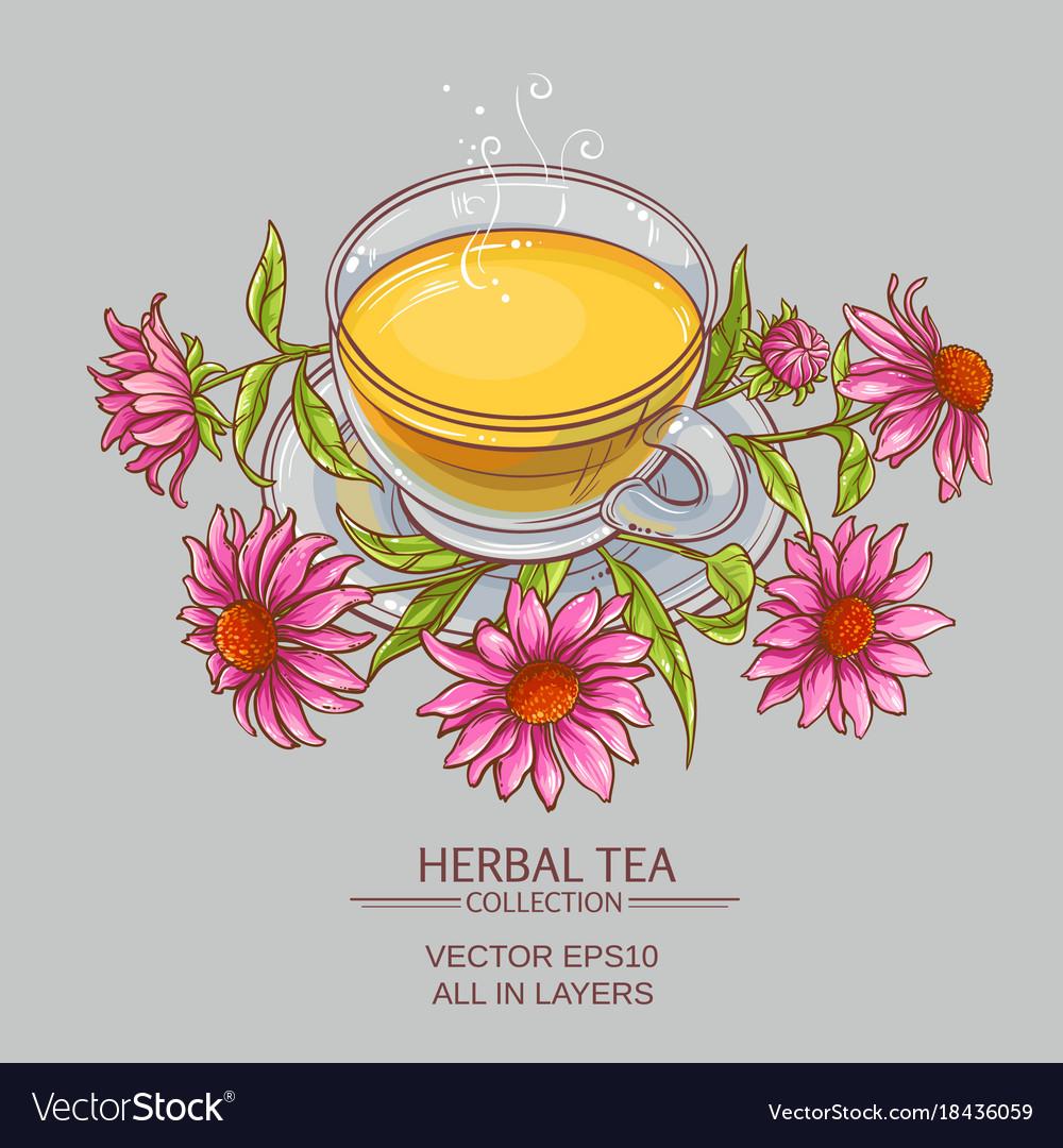Cup of echinacea tea vector image