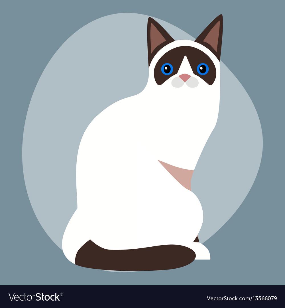 Cat breed siamese cute pet portrait fluffy white vector image