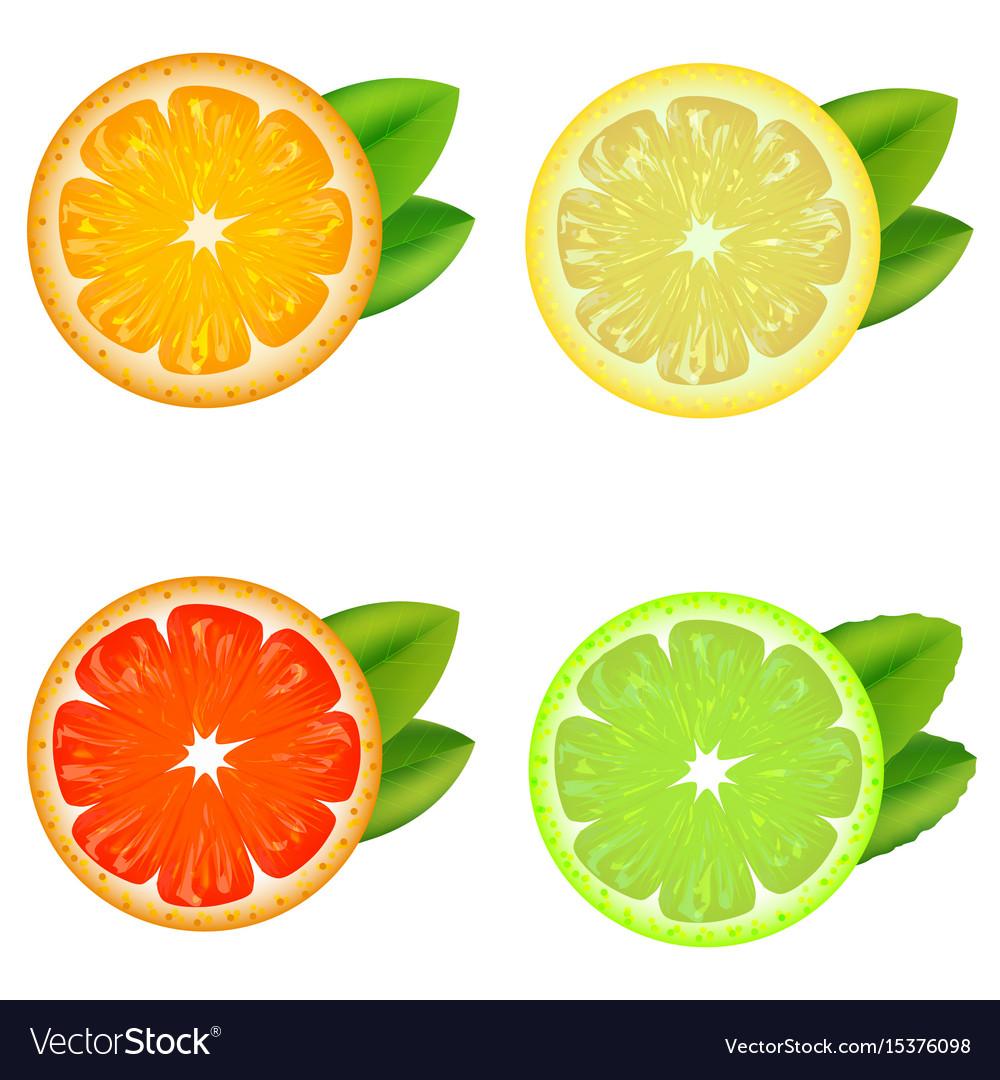 Realistic detailed citrus set vector image