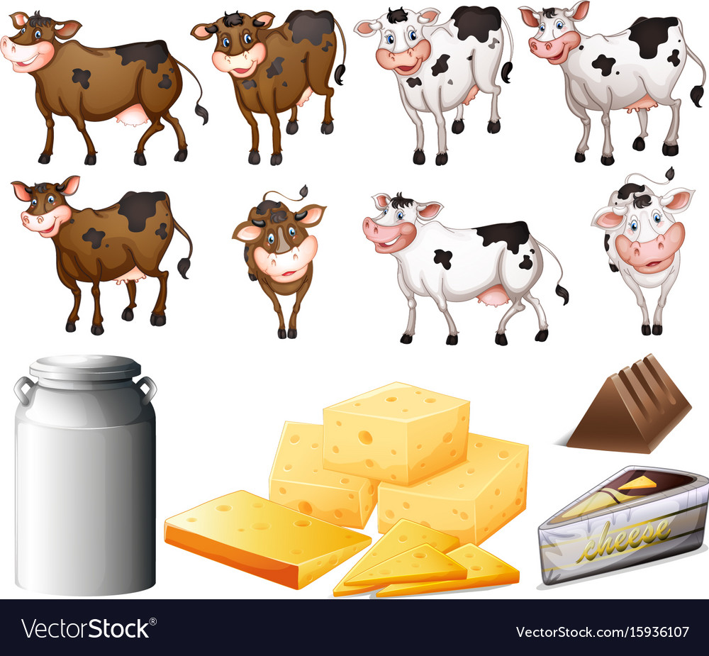 Cows and dairy products vector image