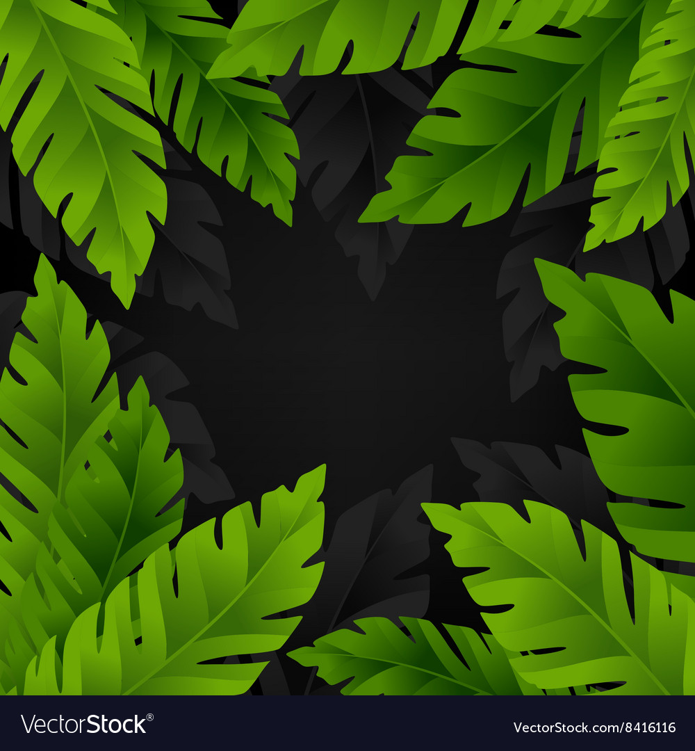 Banana palm leaves background vector image