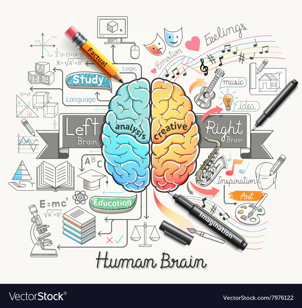 Human brain diagram doodles icons style vector image