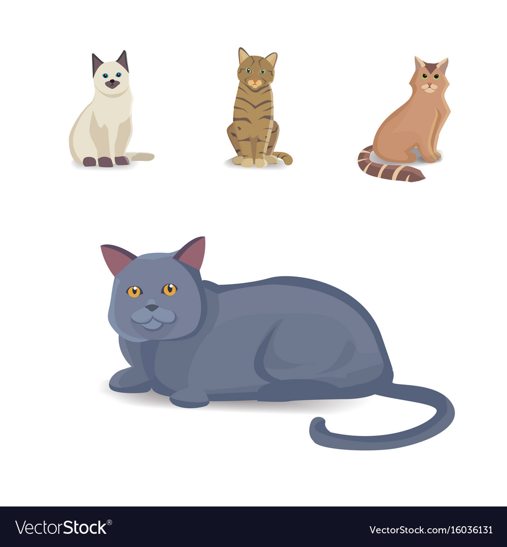 Collection cats of different breeds isolated cat vector image