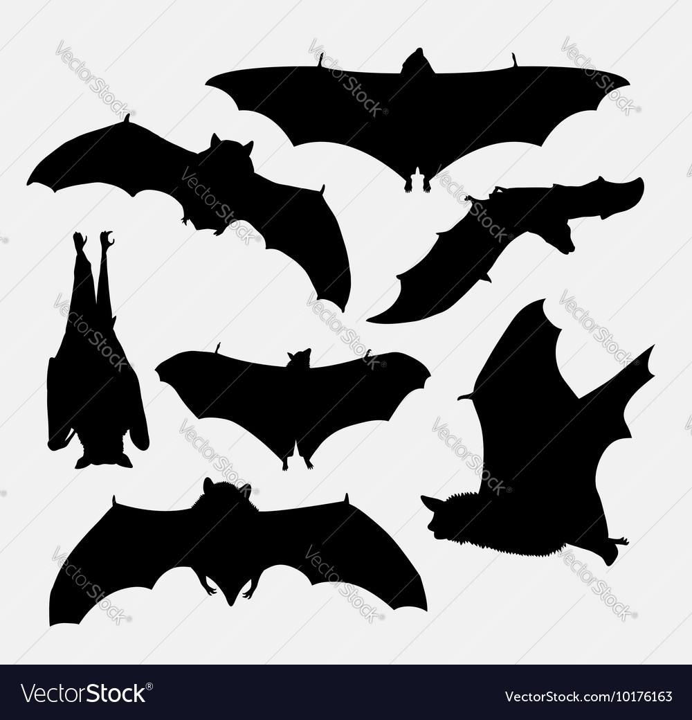 Bat flying animal silhouette vector image