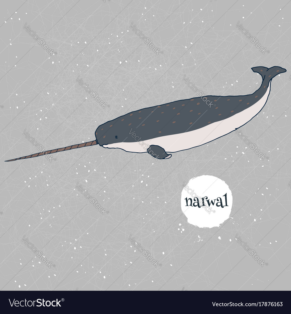 Narwal hand drawn isolated on gray vector image