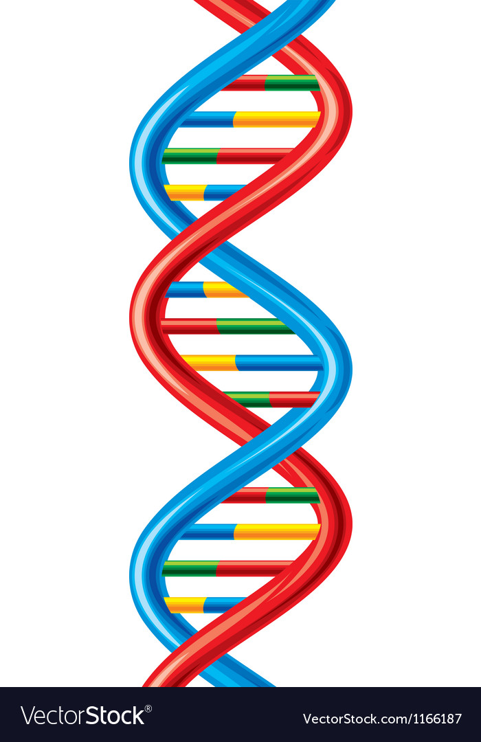 DNA-deoxyribonucleic acid vector image