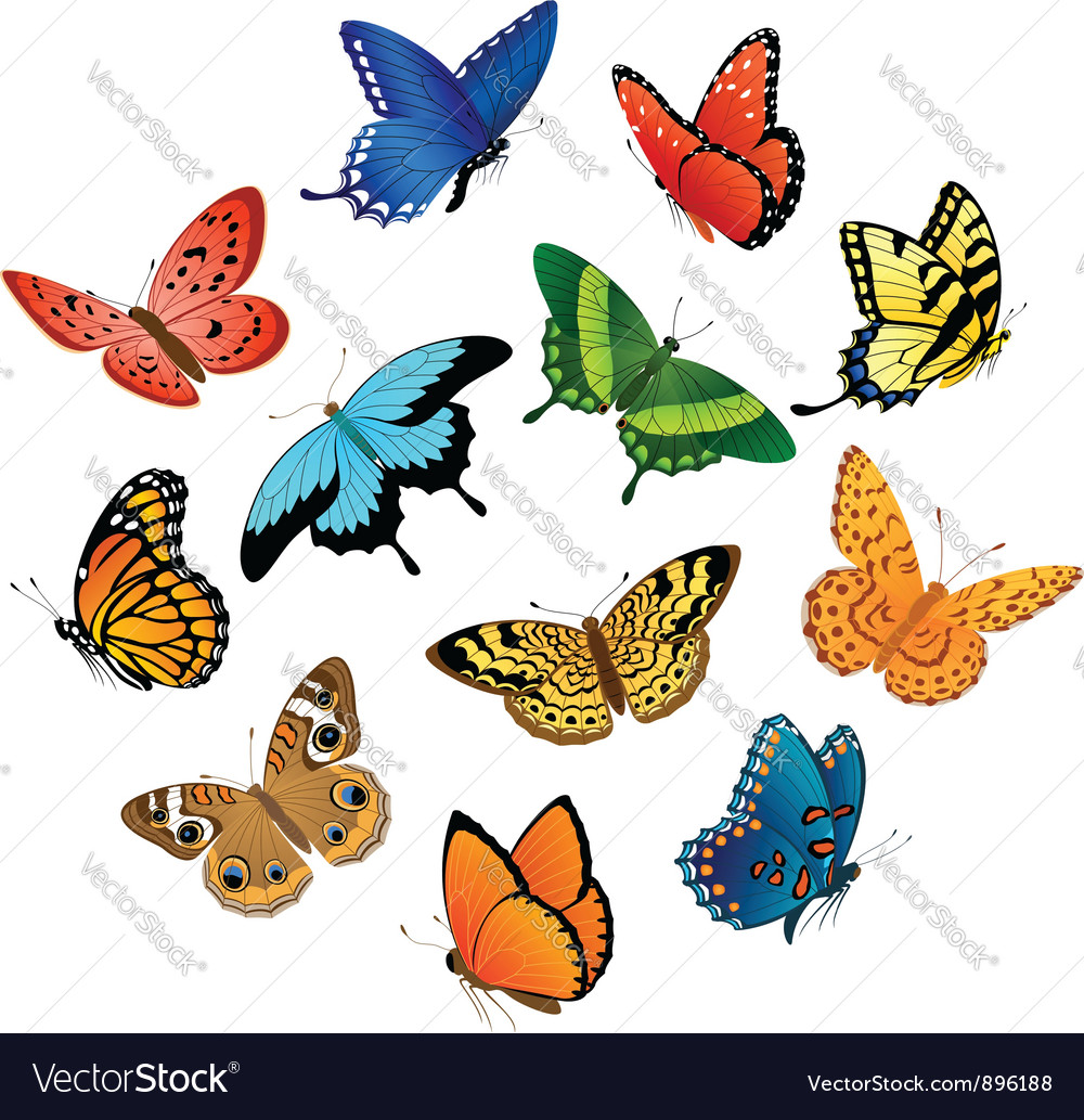 Flying butterflies vector image