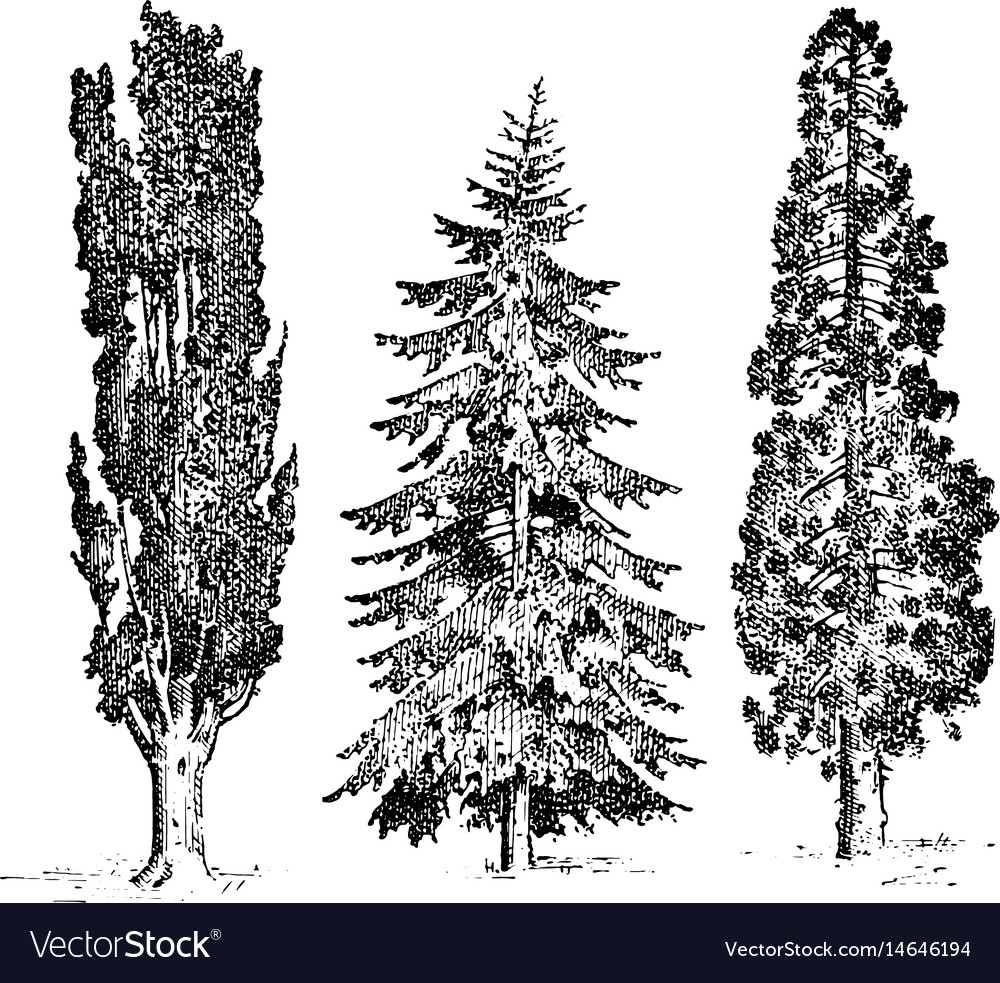 Set of hand drawn trees italian cypress and stone vector image