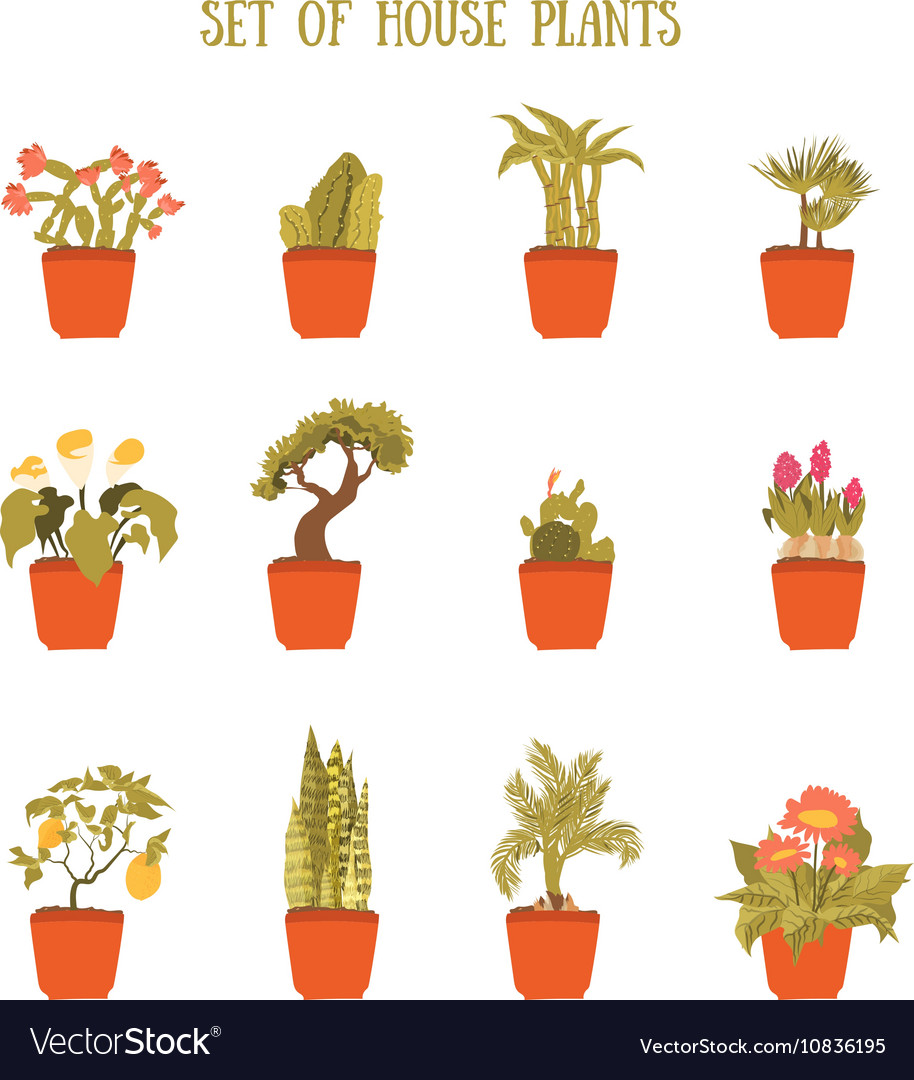 Plant in a pot set decorative element for vector image