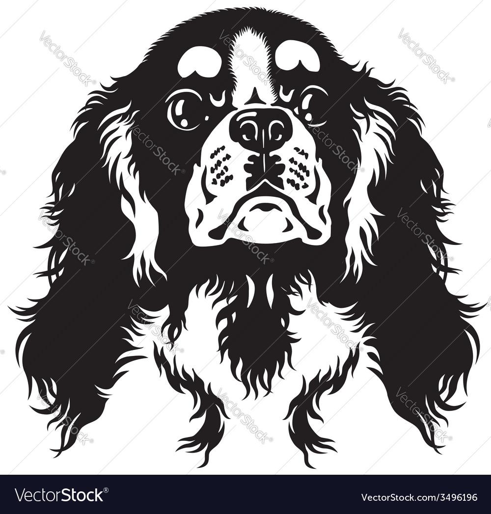 Cavalier King Charles Spaniel Black White Vector Image