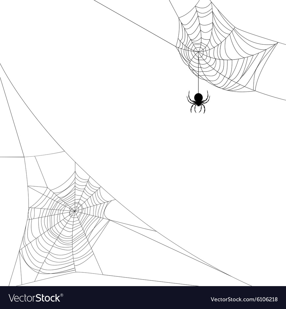 Two spider webs vector image