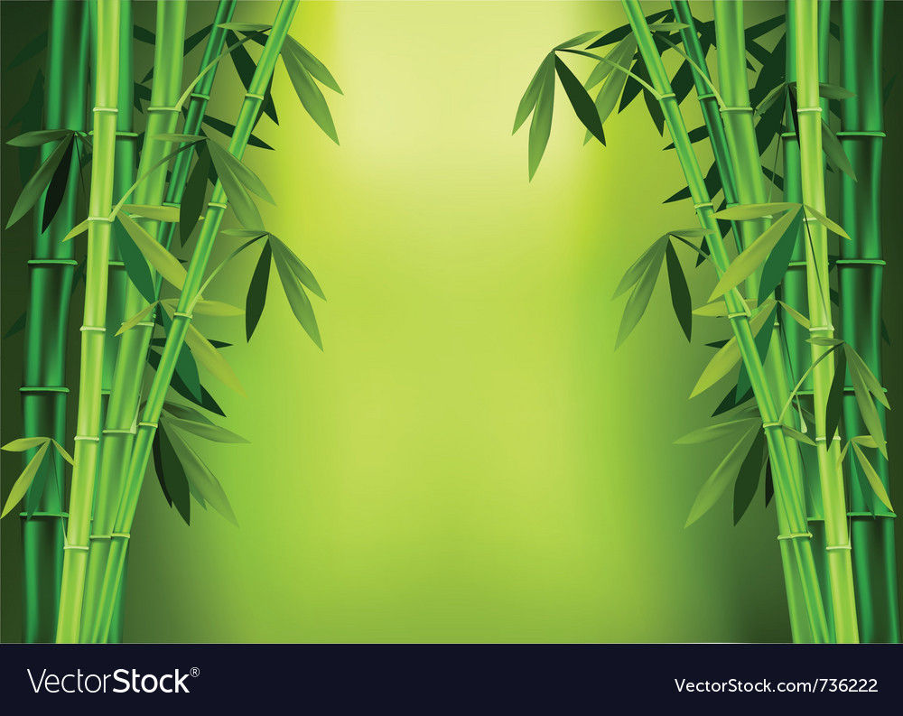 Stalks bamboo vector image