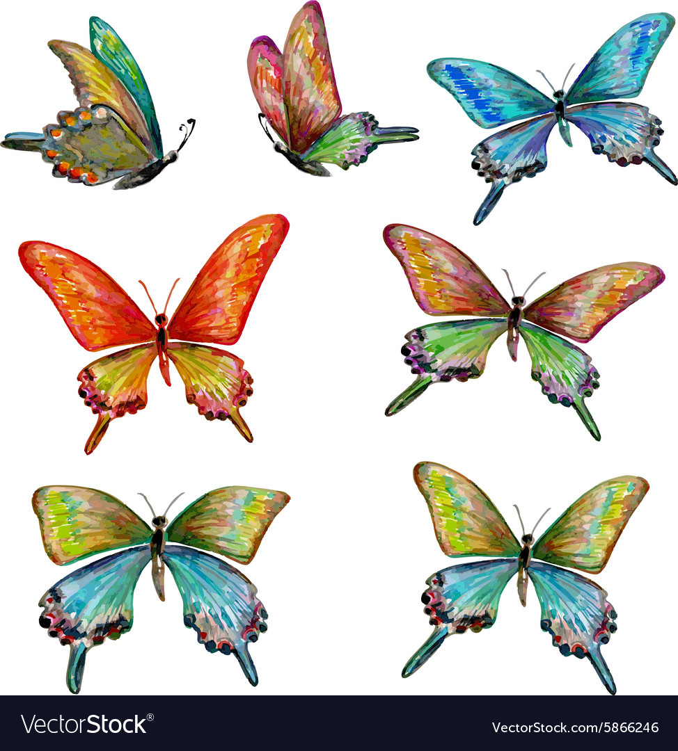 Collection of cute butterflies watercolor painting vector image
