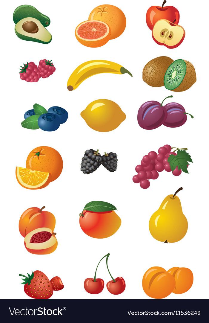 Various fresh fruits vector image