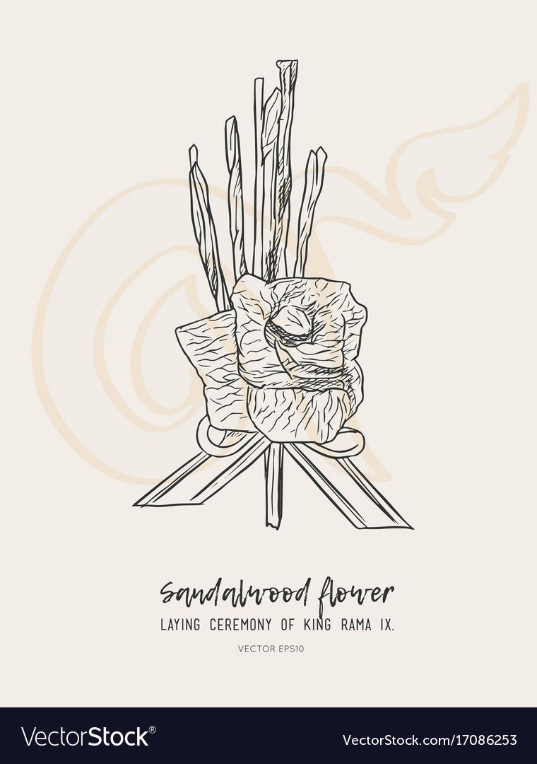 Sandalwood flower for king sketch vector image