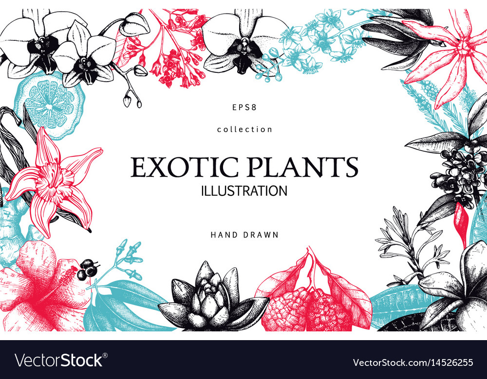 Exotic plants background vector image