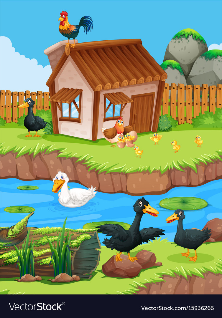 Farm scene with ducks and chickens vector image